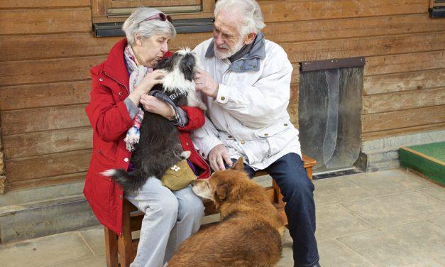 Das Hunde-Seniorendorf